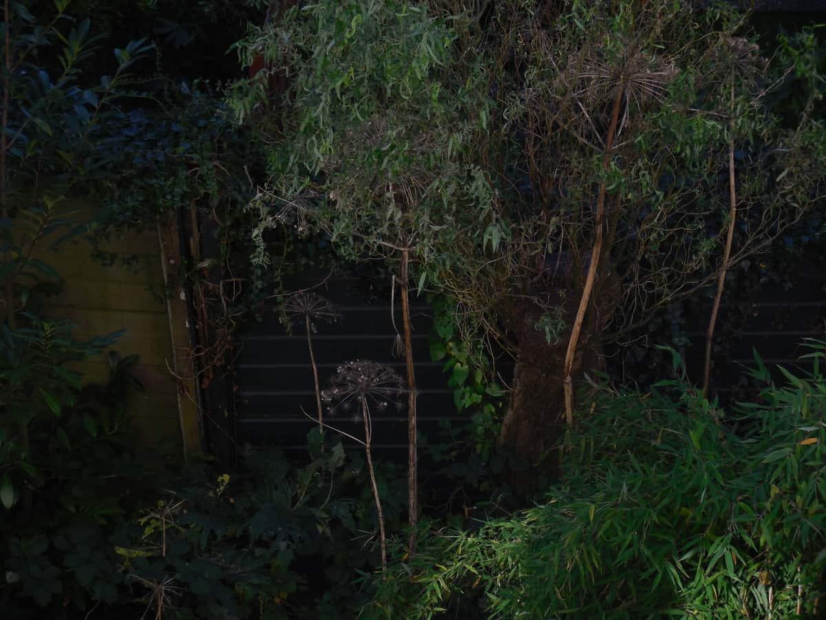 Verval elke dag for Beneden tuin