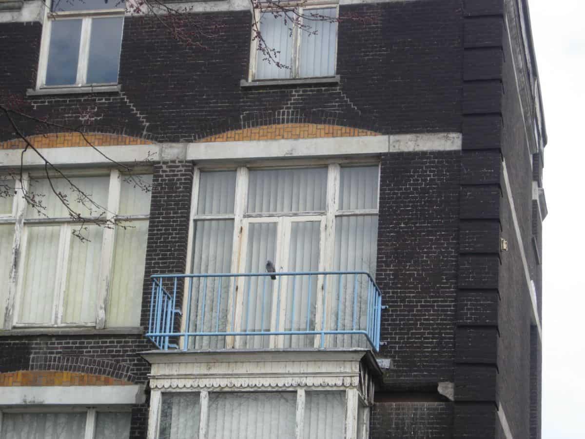 duif balkon Weesperzijde