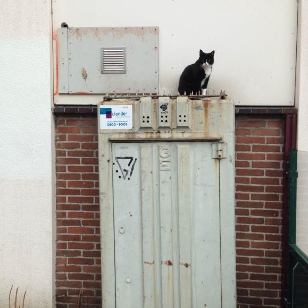 kat op een GEB straatmeubel aan het Hertspiegelplantsoen