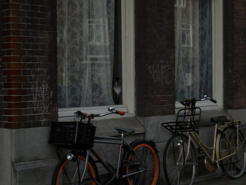 raamkat-fietsen-adm-de-ruijterweg