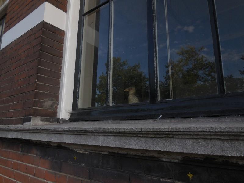 vogel-raam-nep-Mauritskade