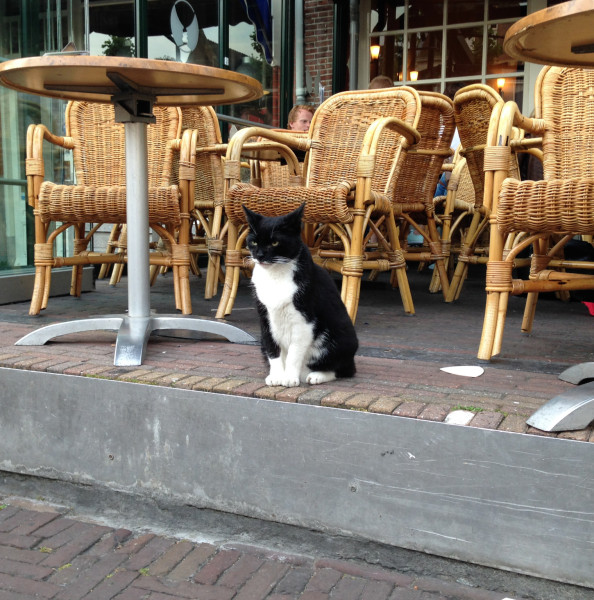 zwarte-kat-cafe-de-roemer-haarlem-cr